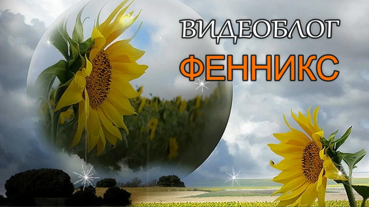 Презентация блога ФЕННИКС