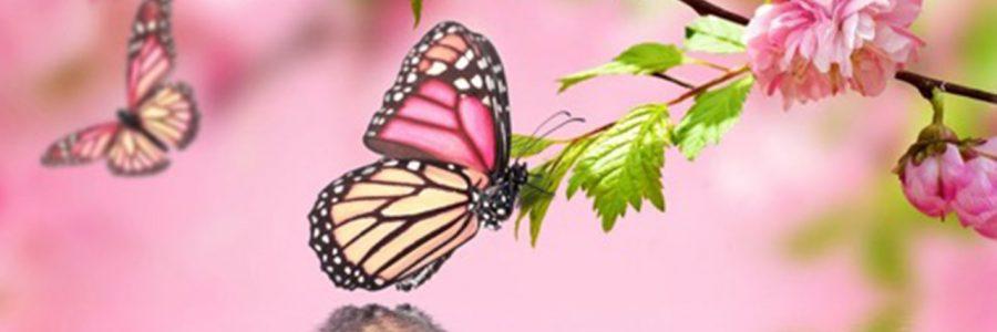 Полет бабочки.